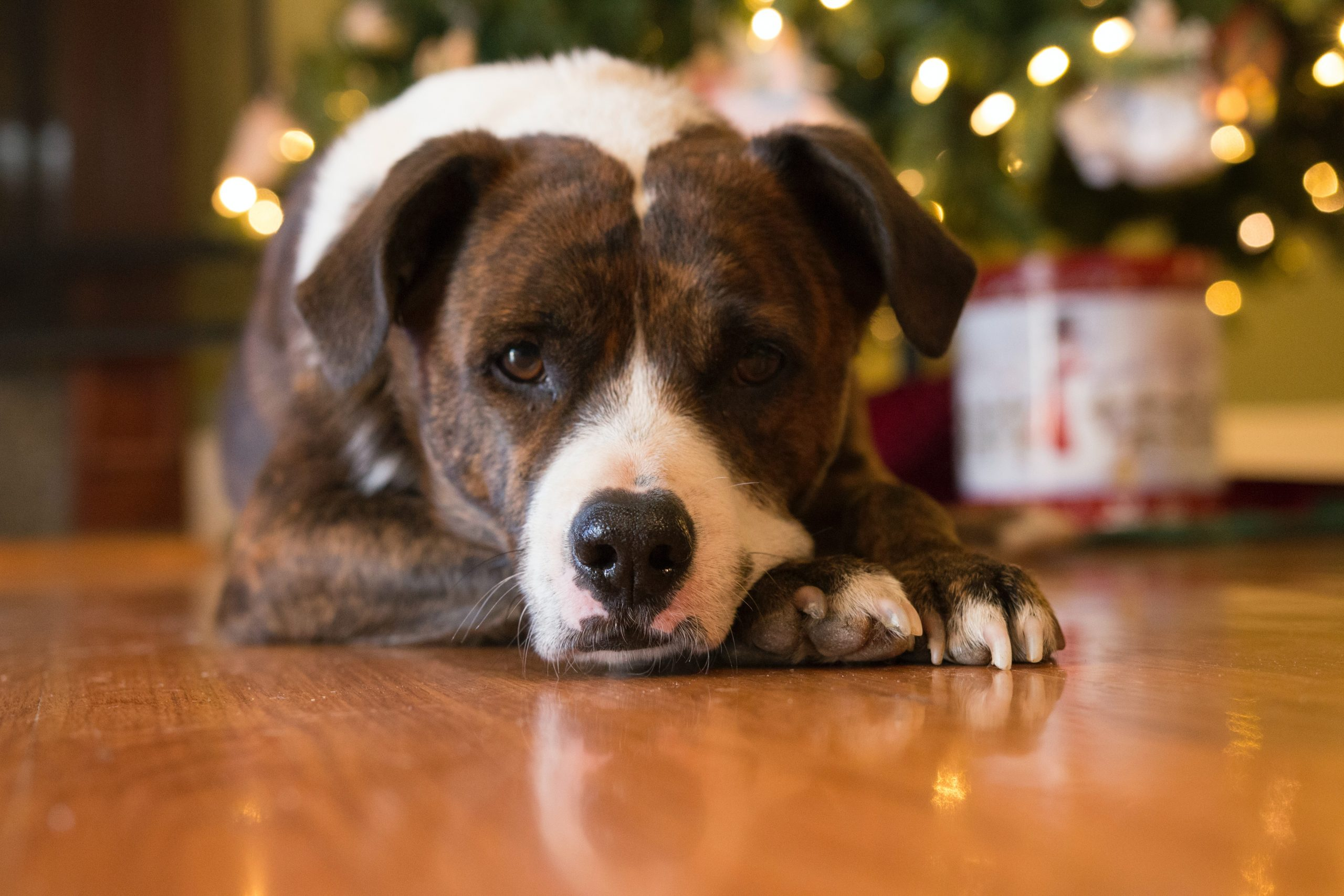 Dog Bite Prevention around the Holidays